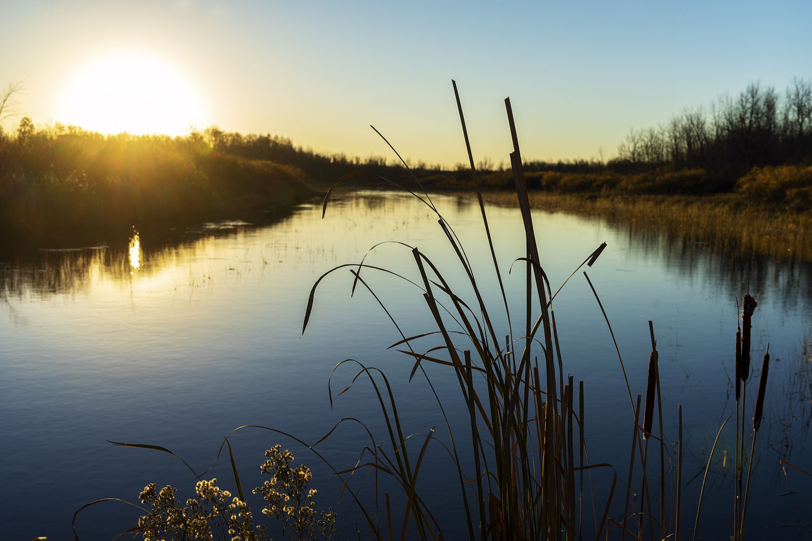 Pond with long grass in the foreground at sunset